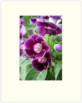 Purple Flowers by Thomas Murphy