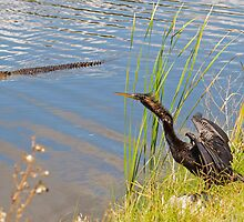 I See You Mr. Gator Stay Away by imagetj