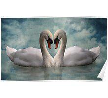 Swan Love Poster