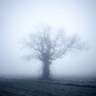 Alone In The Mist by Adam Kennedy