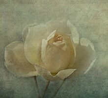fleur d'amour by lucyliu