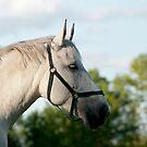 Mercedes - NNEP Ottaw, ON 7 by Tracey  Dryka
