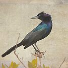 My Grackle Friend by Deborah  Benoit
