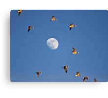 Flutterby the Moon Canvas Print