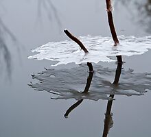 Reflections of Winter by dlhedberg