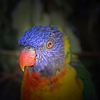 Rainbow Lorikeet 3 by Leanne Allen