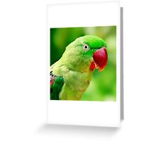 Alexandrine Parrot Greeting Card