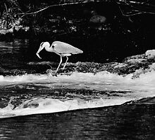 The Heron Strikes, River Barrow, Graiguenamanagh, County Kilkenny by Andrew Jones