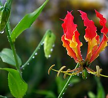 Fire Flame Kissed with Raindrops by Kerryn Madsen-Pietsch