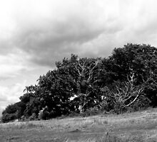 Wind blasted trees on the Downs by rackham963