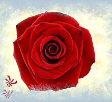 A Rose For You by Linda Miller Gesualdo
