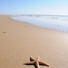 Strandened Starfish by Steve Taylor