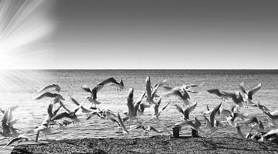 seagulls on takeoff by guido nardacci