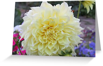 Soft Yellow Dahlia by Sandra Foster
