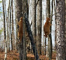 Synchronized Climbing by DebbieCHayes