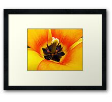 Heart of a Tulip ~ Macro Shot of Stamen & Pistil ~ Yellow Orange Flower Outdoors ~ Flora Photography Framed Print