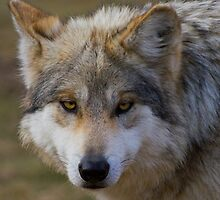 The Eyes Have It  by John Absher