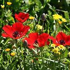 Happy Poppies by Nira Dabush