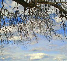 Silhouette against Namibian sky by Irene  van Vuuren