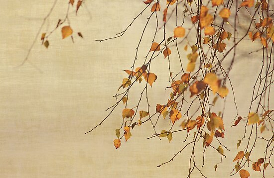 Autumn  by Anne Staub