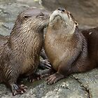 Otter Kisses by Sarah Calvin