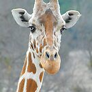 How's it Going?   by Dyle Warren