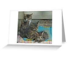 Views 762.  *** Sweet dreams . by Brown Sugar . Featured Image For the Love of Cats..  Favorites: 7 Views: 219. Thank you ! I'm feeling so good ! Yeah! Greeting Card