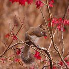 Squirrel Feeding by ejlinkphoto