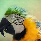 Colorful Macaw by KatMagic Photography