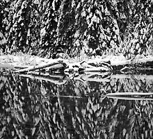 Reflection of Snow Covered Pines by North22Gallery