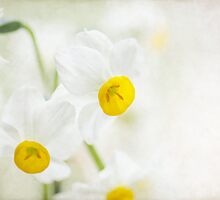 First flowers of Spring by Teresa Pople