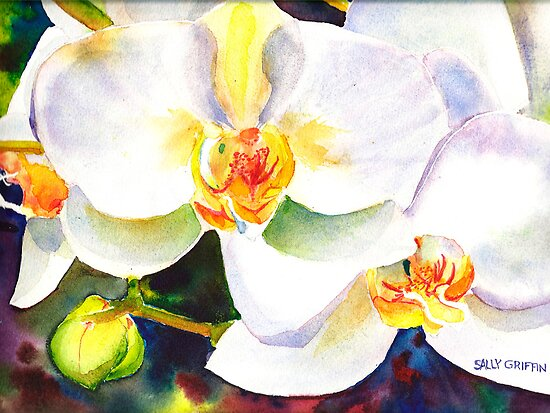 Orchids   by Sally Griffin