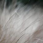 Fountain Grass by Astrid Ewing Photography