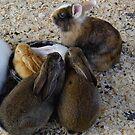 Big Bouncy Bunch of Bunnies by WildestArt
