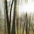 Morning Mist by Jennifer Rhoades
