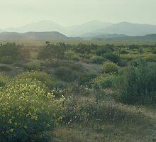 Spring Flowering Desert by Diana Sproul
