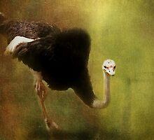 Curious Ostrich by Carol Bleasdale