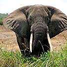 Elephant On Patrol by Stephen Monro