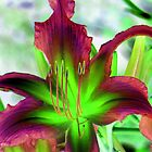 My Special Lily © by Dawn M. Becker