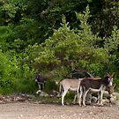 Donkeys by luissantos84