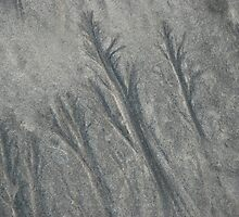 wet sand texture 2 by Michael Brewer