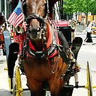 Horse Drawn Carriage by Joseph Pacelli
