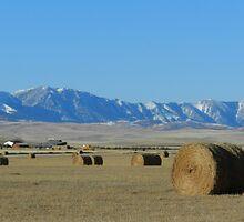 High Prairies by Darcy Overland