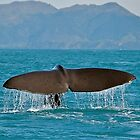 Fluking Whale by Images Abound | Neil Protheroe