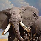 Big Ear Elephant by Guatemwc