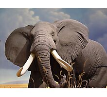 Big Ear Elephant Photographic Print