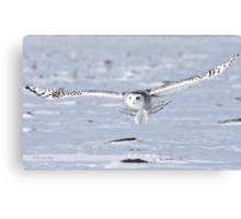 Winged Messenger Canvas Print