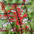 Macro Magic banner challenge  by cathywillett