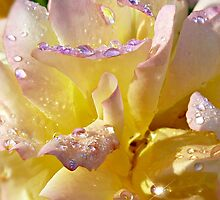 Nature's Jewels by Morag Bates