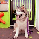 Paws - Katie outside the pet shop by WolfieRankin